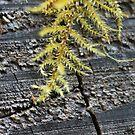 Feathery Moss by Annie Underwood