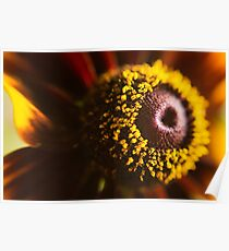 Closeup crop of a vibrant yellow and orange Daisy in full bloom  Poster