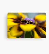 Closeup crop of a vibrant yellow and orange Daisy in full bloom  Canvas Print