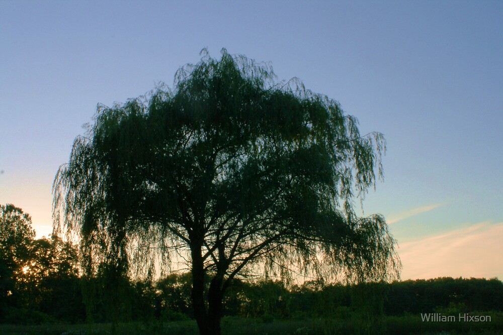 Weeping Willow by William Hixson