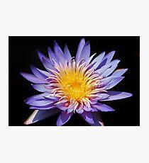 Purple Lotus Photographic Print