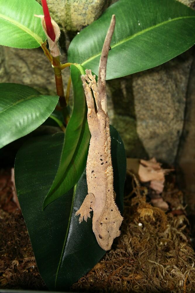 crested gecko by Brynne Kaufmann