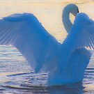 On the wings of an Angel by Grahame Newell