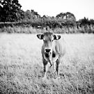 Cow and Nature by FRANCK TORRALBA