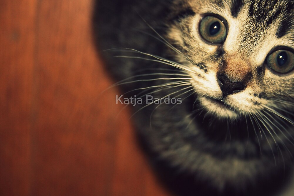 Elphie by Katja Bardos