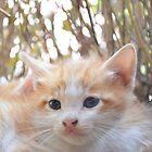 Cute Cat by Mubasher Kaleem