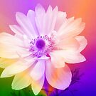 Colorful Flower. by Forfarlass