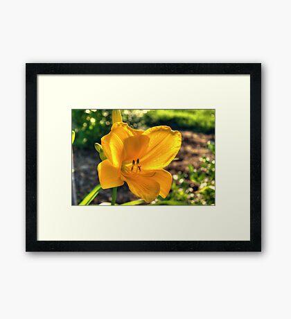 luce d'oro Framed Print