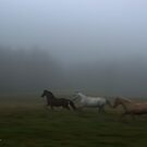 A Run Through the Mist by Betty MacRae