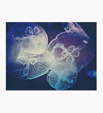 Jellyfish Storm Photographic Print