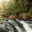 Go With The Flow by Di Jenkins