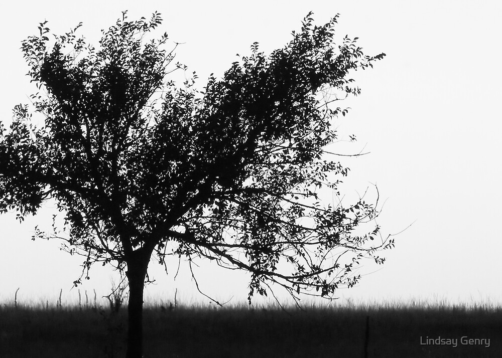 Silhouette After Sunset by Lindsay Genry