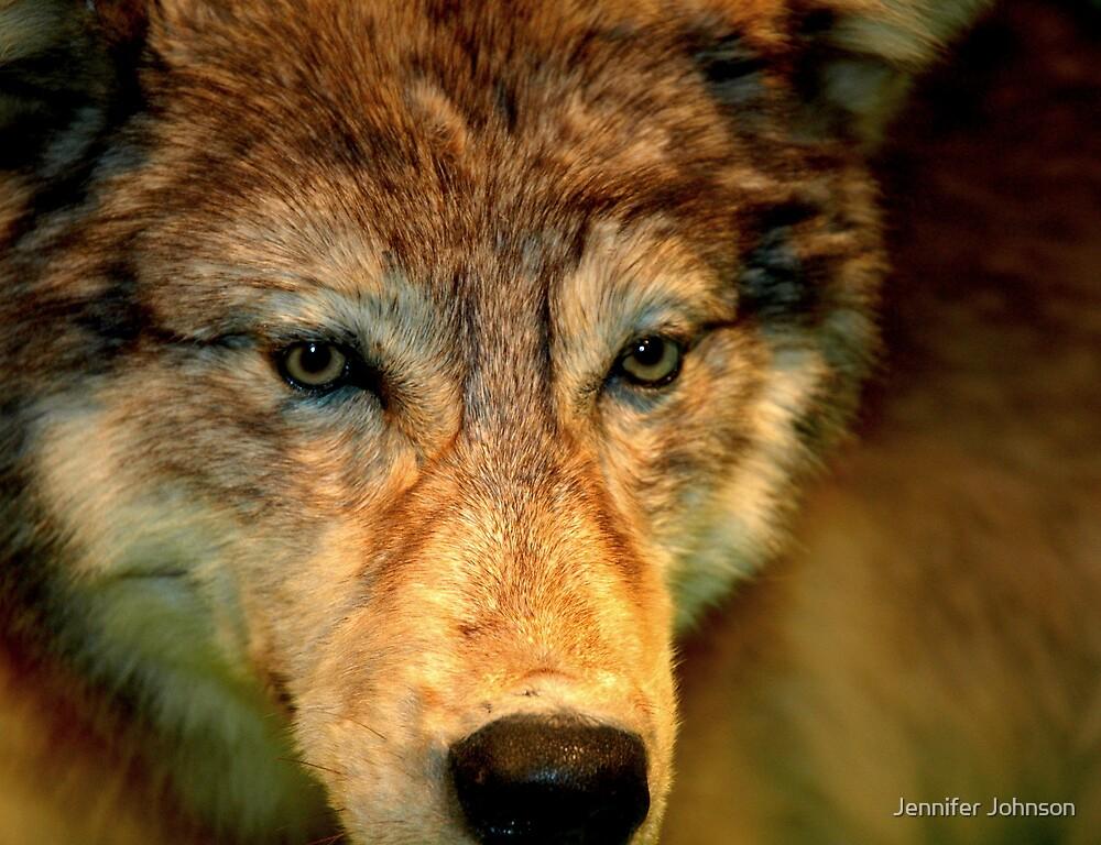 Wolf Wolf  by Jennifer Johnson