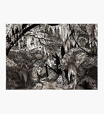 Spooky Forest Road Illustration Photographic Print