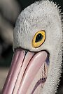 The Pelican Look by Werner Padarin