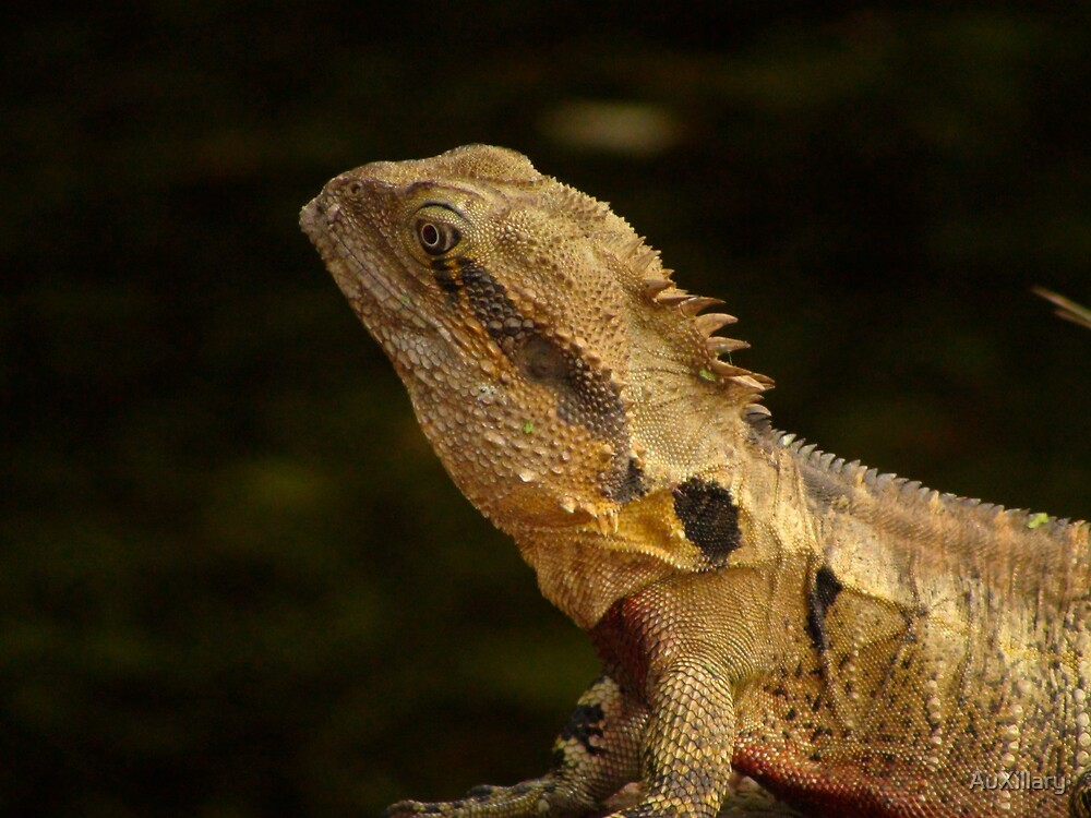 Bearded Water Dragon by AuXillary