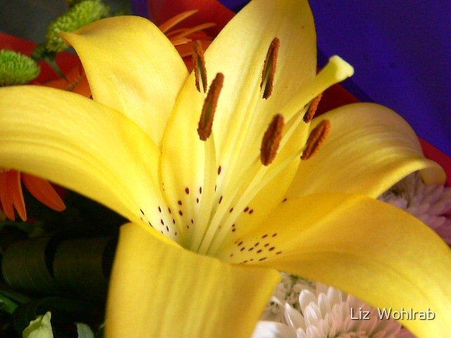 yellow days  by Liz  Wohlrab