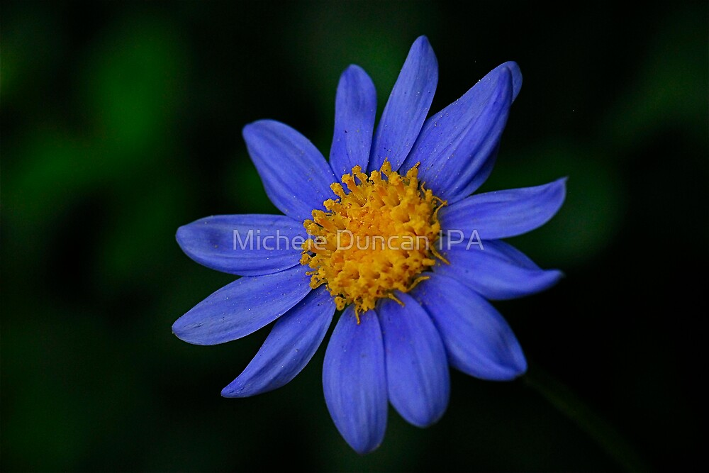 Blue by Michele Duncan IPA