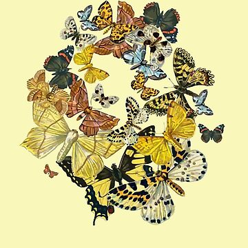 A Kaleidoscope Of Vintage Butterflies Vector by taiche