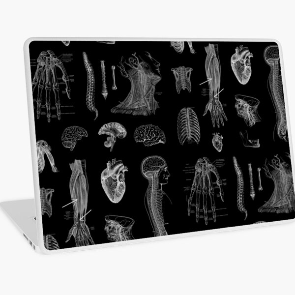 Vintage Anatomy Print  Laptop Skin