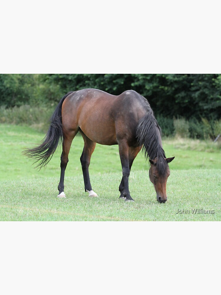 Braunes Pferd von Johnmfc81