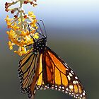 Leadlight Butterfly by Penny Kittel