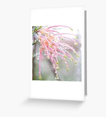 Drops of pale grevillea Greeting Card
