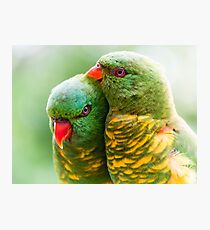 Scaly Affection Photographic Print