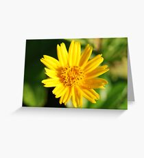 Bathing in the Light - Aphid on Yellow Dot  Greeting Card
