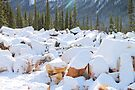 Among the Rocks: Autumn Snow in The Rockies by Carole-Anne