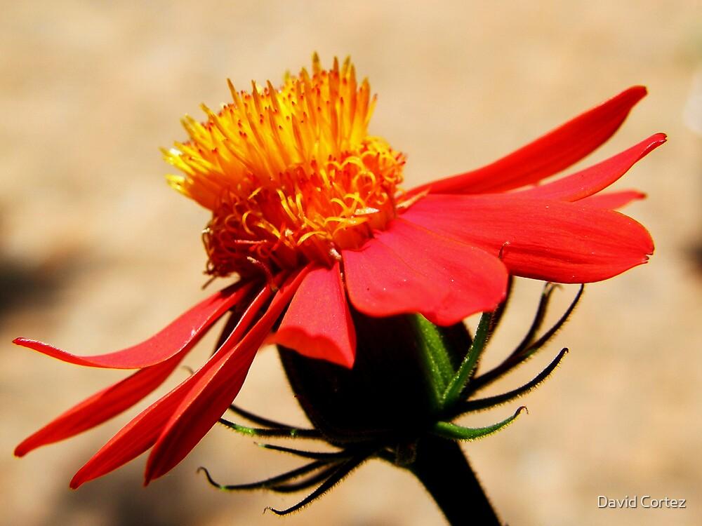 Flower by David Cortez