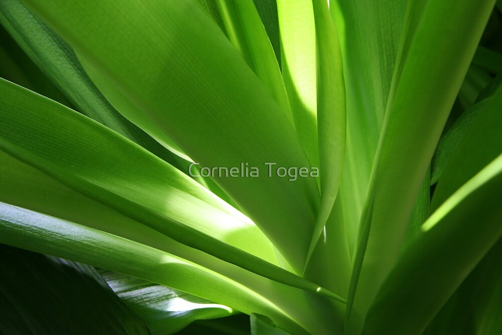 light play on leaves by Cornelia Togea