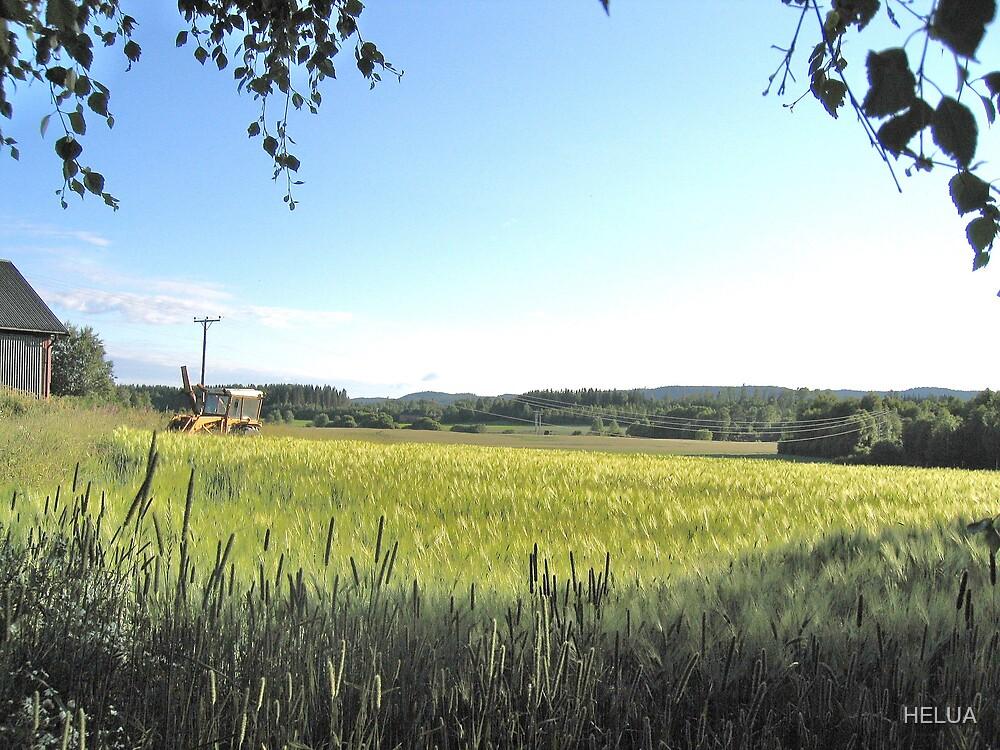 Green Farm Field by HELUA