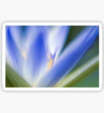 Selective focus of a blue water lily in a pond  Sticker