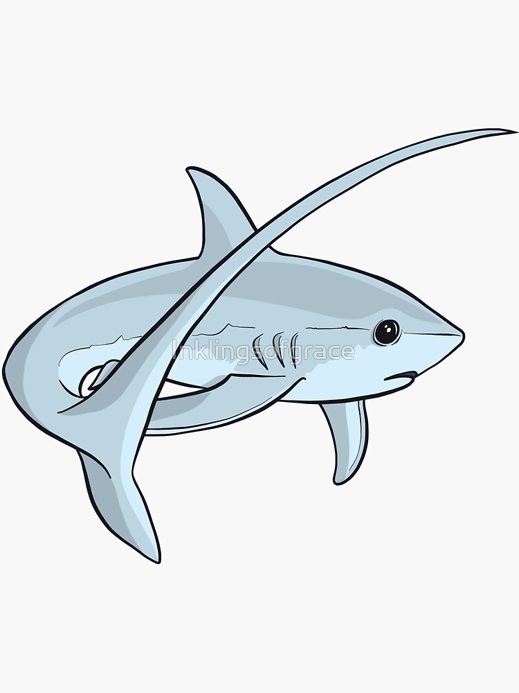Adorable Cute Thresher Shark  by Inklingsofgrace