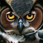 Animalia: Great Horned Owl by NoelleMBrooks