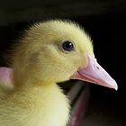 Baby Duck by Robert Goulet