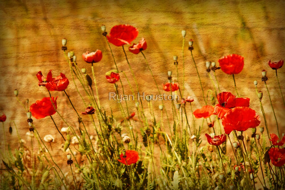 Red Poppies by Ryan Houston