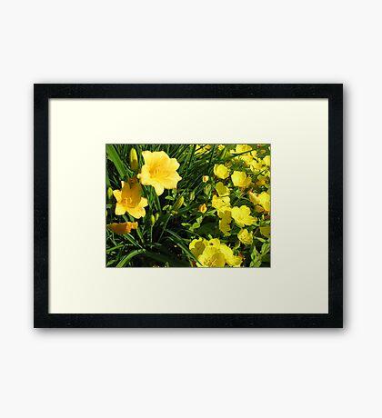 Yellow Flowers #2 Framed Print