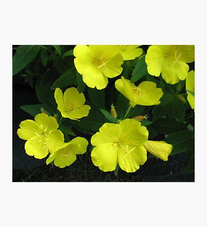Yellow Flowers #4 Photographic Print
