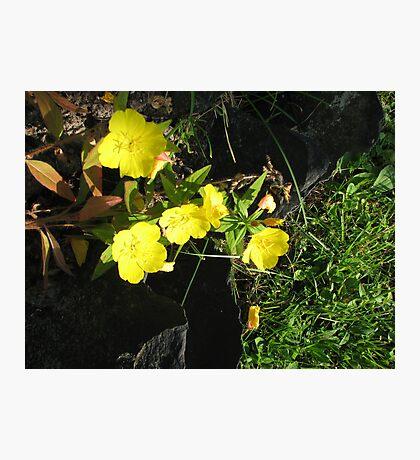 Yellow Flowers #5 Photographic Print