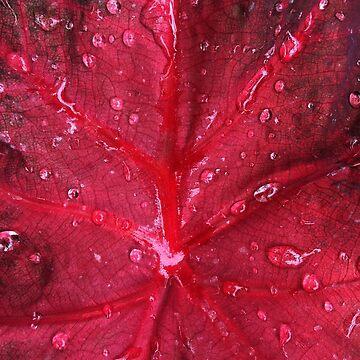 Red leaf by thali6