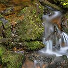 Green and Mossy Water Flow by Bo Insogna
