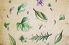 Parsley, Sage, Rosemary and Thyme by Barbora  Urbankova