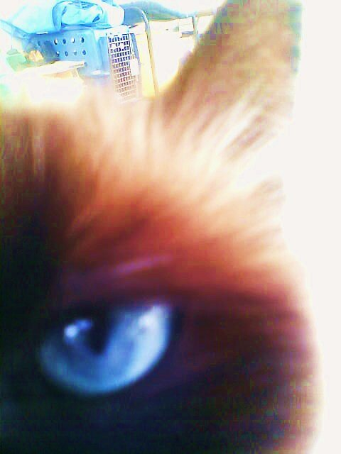 Cat's Eye by Gem Eve