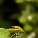 Green Bug by Frank Yuwono