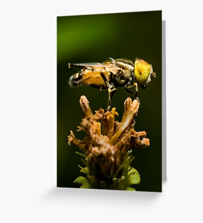 Yellow-eyed Hoverfly Greeting Card