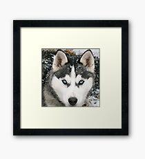 Game Thrones Wolf Stark 2 Framed Print