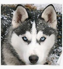 Game Thrones Wolf Stark 2 Poster