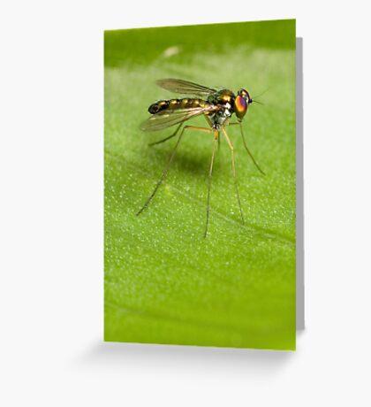 Long-legged Beauty Greeting Card